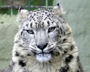 Welsh Mountain Zoo image 12